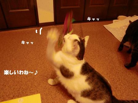 コピー ~ CIMG2026