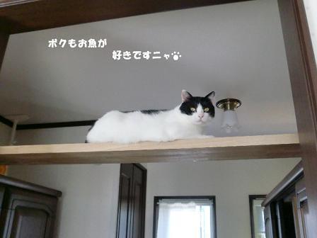 コピー ~ CIMG0841