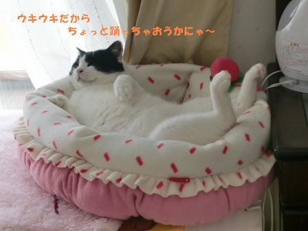 コピー ~ CIMG0300