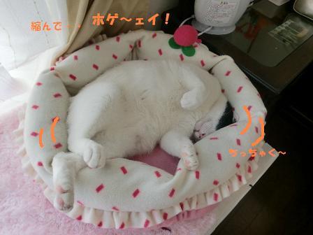 コピー ~ CIMG0308