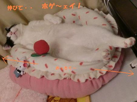 コピー ~ CIMG0346