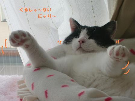 コピー ~ CIMG0302
