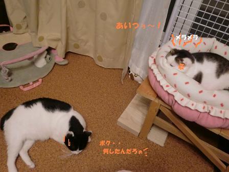 コピー ~ CIMG1263
