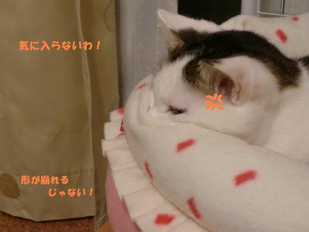 コピー (2) ~ CIMG1264