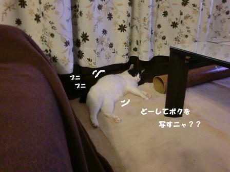 コピー ~ CIMG0207