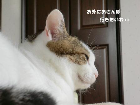 コピー ~ CIMG0731