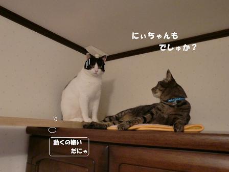 コピー ~ CIMG1009