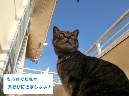 コピー ~ CIMG2380