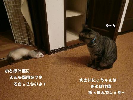 コピー ~ CIMG0820