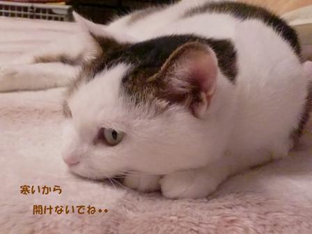 コピー ~ CIMG2493
