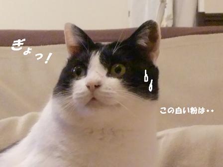 コピー ~ CIMG2488