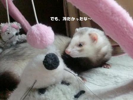 コピー ~ CIMG2788