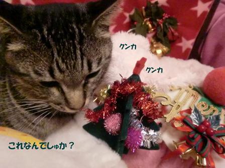 コピー ~ CIMG2650