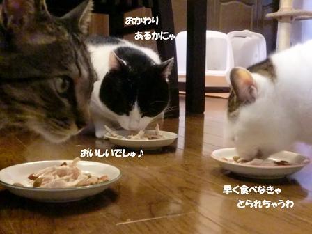 コピー ~ CIMG2892