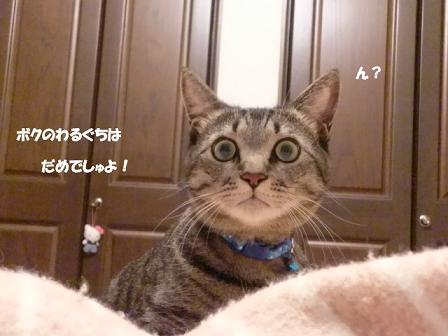 コピー ~ CIMG2452