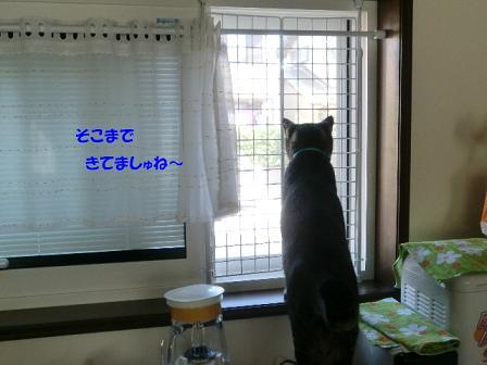 コピー ~ CIMG1144