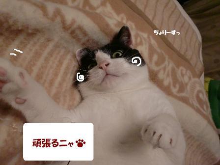 コピー ~ CIMG1427