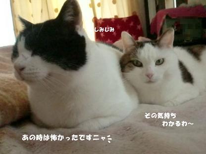コピー ~ CIMG2710