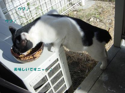 コピー ~ コピー ~ DSC01972