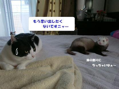 コピー ~ CIMG0595