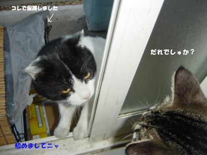 コピー ~ コピー ~ DSC02463