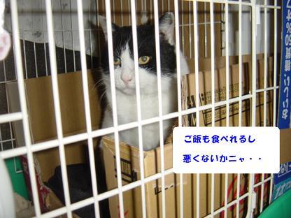 コピー ~ コピー ~ DSC02510
