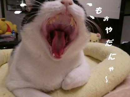 コピー ~ CIMG1715