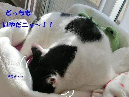 コピー ~ CIMG2478