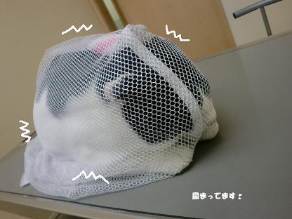 コピー ~ CIMG3113