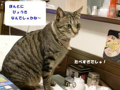 コピー ~ CIMG0042
