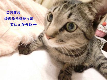 コピー ~ CIMG2343