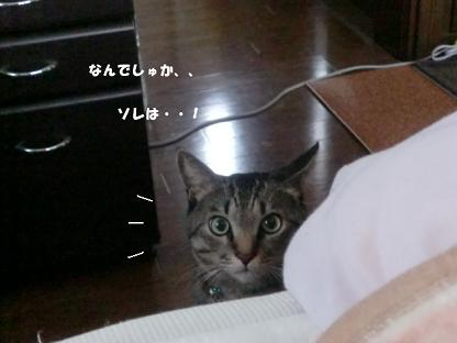 コピー ~ CIMG2582