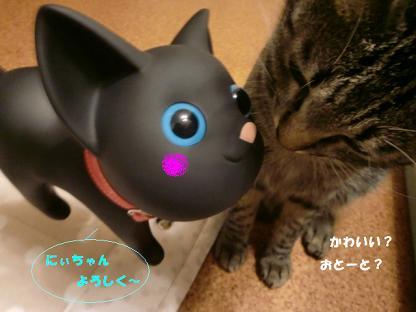 コピー ~ CIMG2586