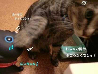 コピー ~ CIMG2588