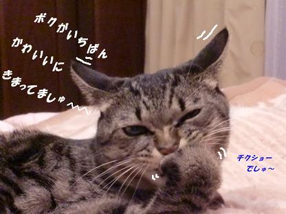 コピー ~ CIMG2534