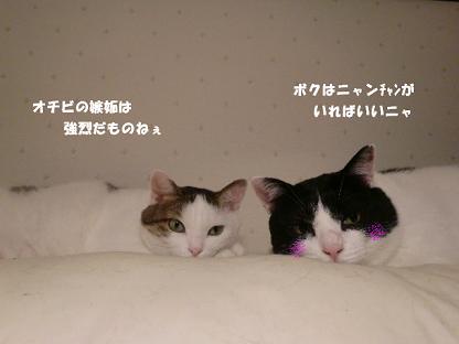 コピー ~ CIMG1612