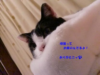 コピー ~ CIMG2451