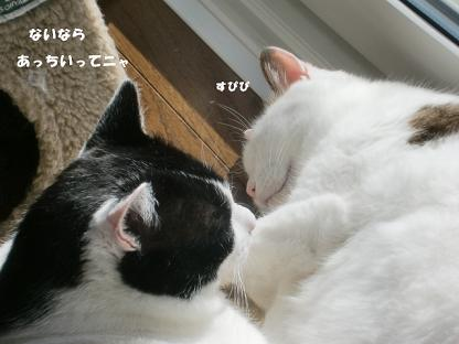 コピー ~ CIMG3151