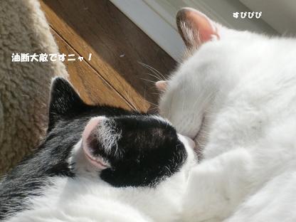 コピー ~ CIMG3152