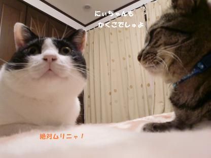 コピー ~ CIMG1730
