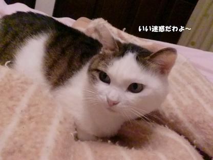 コピー ~ CIMG2988