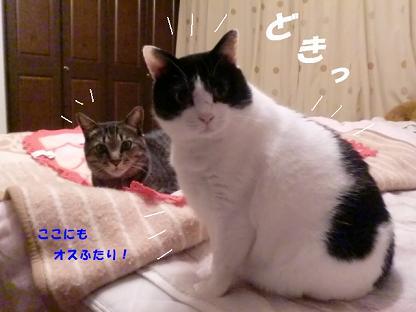 コピー ~ CIMG3117