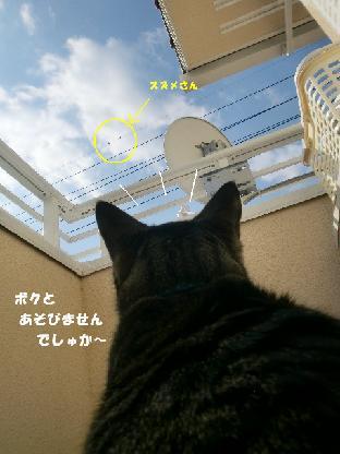 コピー ~ CIMG3276