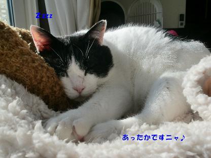 コピー ~ CIMG3269