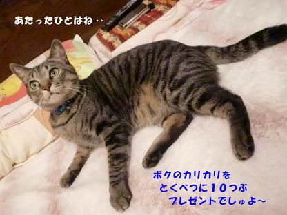 コピー ~ CIMG2543
