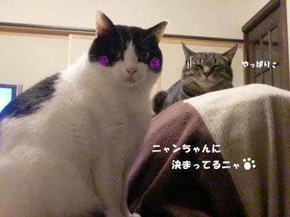 コピー ~ CIMG3024
