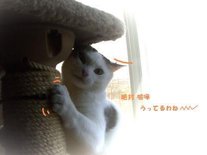 コピー ~ CIMG0503