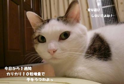 コピー ~ CIMG1183
