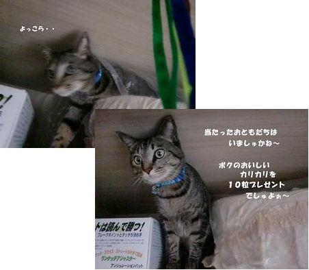コピー ~ CIMG2672