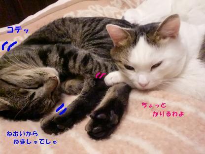コピー ~ CIMG3307